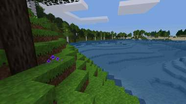 A tranquil bay with grass and trees
